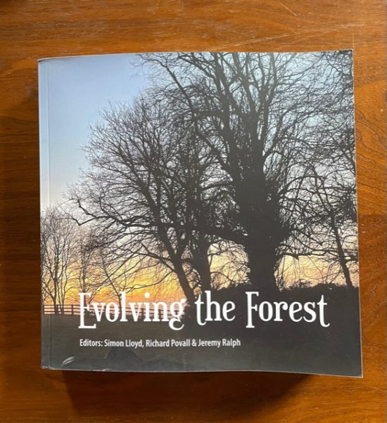Re-Enchantment essay, Evolving the Forest publication, December 2020